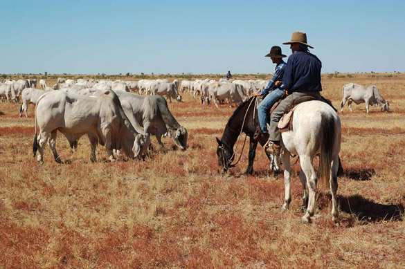 herd2-585